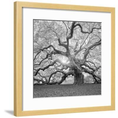 The Tree Square-BW 2-Moises Levy-Framed Premium Photographic Print