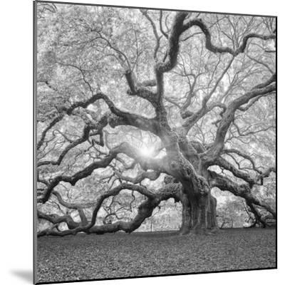 The Tree Square-BW 2-Moises Levy-Mounted Premium Photographic Print