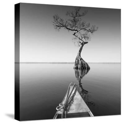 Alone with My Tree-Moises Levy-Stretched Canvas Print