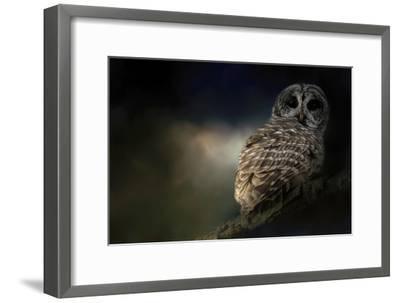 Barred Owl on a Winter Night-Jai Johnson-Framed Giclee Print