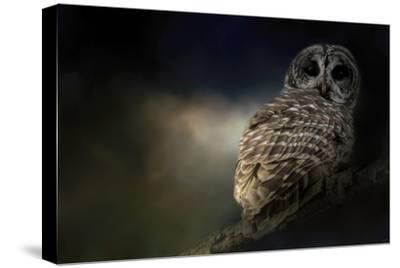 Barred Owl on a Winter Night-Jai Johnson-Stretched Canvas Print