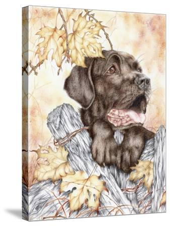 Look Back-Karen Middleton-Stretched Canvas Print