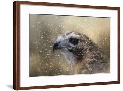 Winter Redtail-Jai Johnson-Framed Giclee Print