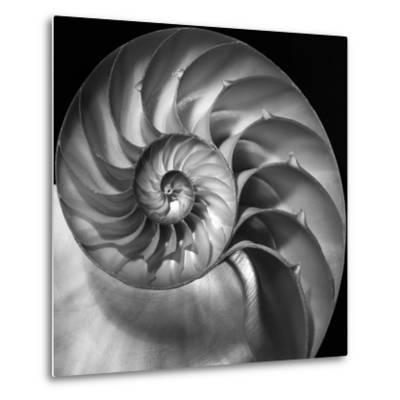 Nautilus 2-Moises Levy-Metal Print