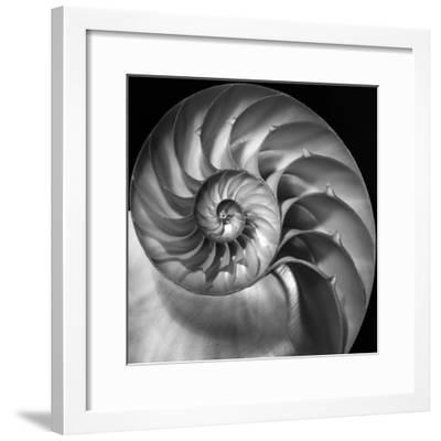 Nautilus 2-Moises Levy-Framed Photographic Print