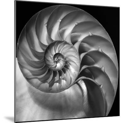 Nautilus 2-Moises Levy-Mounted Photographic Print