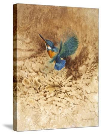 Kingfisher Study-Michael Jackson-Stretched Canvas Print