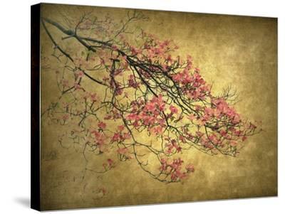 Asian Dogwood-Jessica Jenney-Stretched Canvas Print