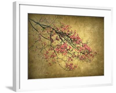 Asian Dogwood-Jessica Jenney-Framed Giclee Print