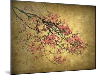 Asian Dogwood-Jessica Jenney-Mounted Giclee Print