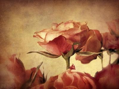 Gilded Roses-Jessica Jenney-Framed Giclee Print