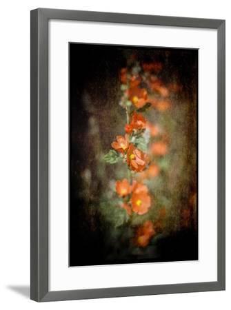 Desert Flower 5-LightBoxJournal-Framed Giclee Print