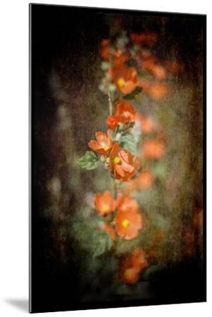 Desert Flower 5-LightBoxJournal-Mounted Giclee Print
