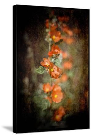 Desert Flower 5-LightBoxJournal-Stretched Canvas Print