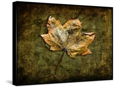 Metallic Leaf 1-LightBoxJournal-Stretched Canvas Print