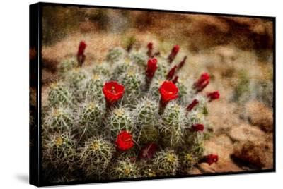 Desert Flower 3-LightBoxJournal-Stretched Canvas Print