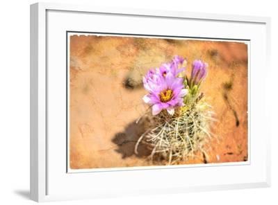 Desert Flower 4-LightBoxJournal-Framed Giclee Print