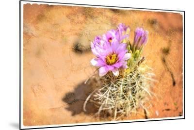 Desert Flower 4-LightBoxJournal-Mounted Giclee Print