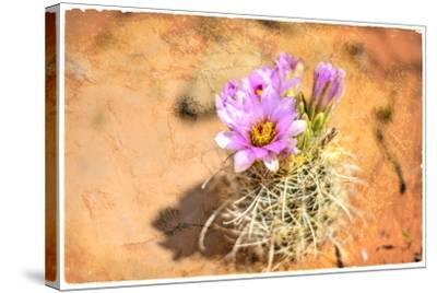 Desert Flower 4-LightBoxJournal-Stretched Canvas Print