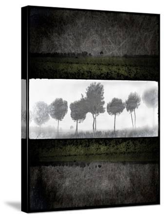 Black Tree 2-LightBoxJournal-Stretched Canvas Print