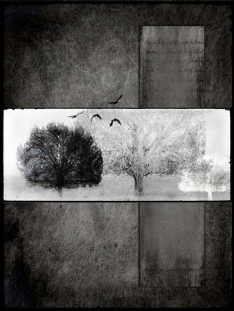 Black Tree 1-LightBoxJournal-Framed Giclee Print