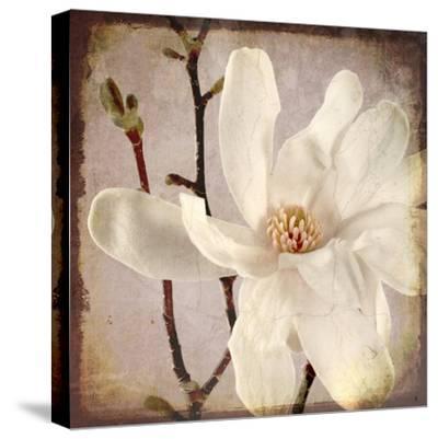 Paper Magnolia Closeup-LightBoxJournal-Stretched Canvas Print