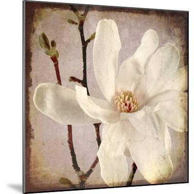 Paper Magnolia Closeup-LightBoxJournal-Mounted Giclee Print