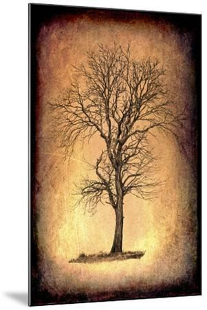 For the Love of Trees II-LightBoxJournal-Mounted Giclee Print