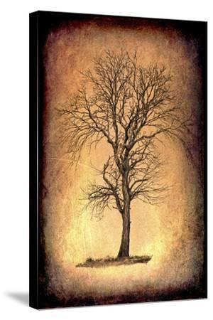 For the Love of Trees II-LightBoxJournal-Stretched Canvas Print