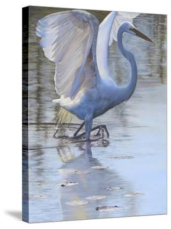 Bird-Rusty Frentner-Stretched Canvas Print