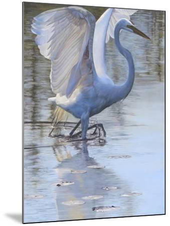 Bird-Rusty Frentner-Mounted Giclee Print