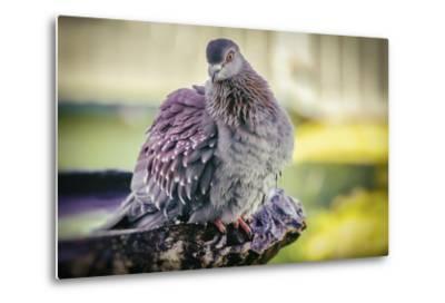 Bird-Pixie Pics-Metal Print