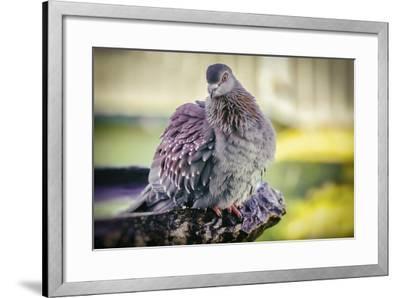 Bird-Pixie Pics-Framed Photographic Print