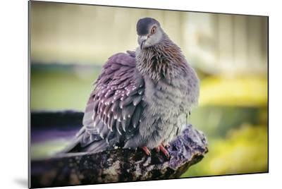 Bird-Pixie Pics-Mounted Photographic Print
