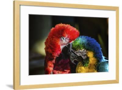 Birds-Pixie Pics-Framed Photographic Print