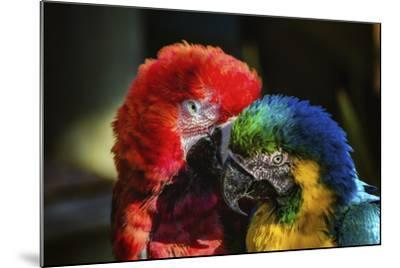 Birds-Pixie Pics-Mounted Photographic Print