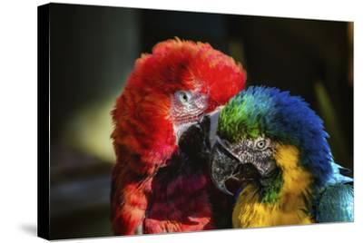 Birds-Pixie Pics-Stretched Canvas Print