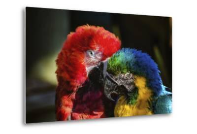 Birds-Pixie Pics-Metal Print