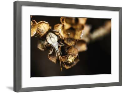 Shield Bug on Brown Leaves-Pixie Pics-Framed Photographic Print