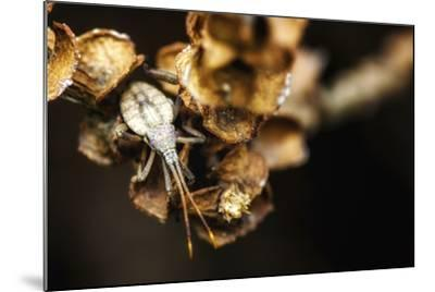 Shield Bug on Brown Leaves-Pixie Pics-Mounted Photographic Print