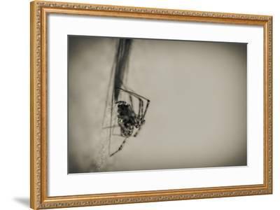 Spider 1-Pixie Pics-Framed Photographic Print