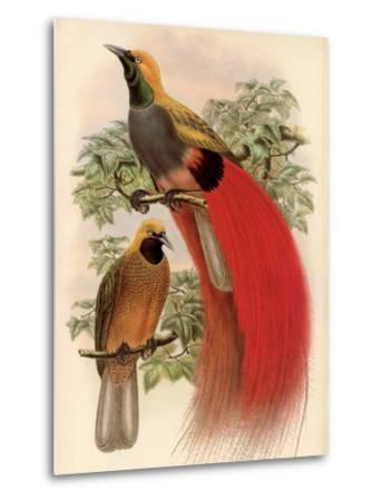 Scarlet Bird of Paradise-Alastair Reynolds-Metal Print
