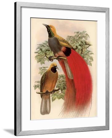 Scarlet Bird of Paradise-Alastair Reynolds-Framed Art Print