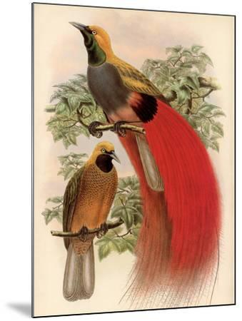 Scarlet Bird of Paradise-Alastair Reynolds-Mounted Art Print