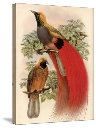 Scarlet Bird of Paradise-Alastair Reynolds-Stretched Canvas Print