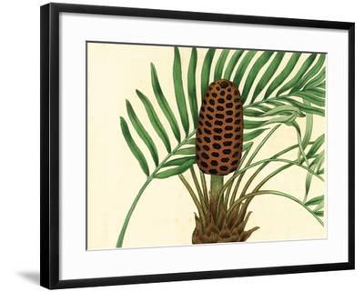 Palmetto III-Zachary Alexander-Framed Art Print