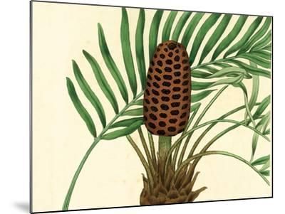 Palmetto III-Zachary Alexander-Mounted Art Print