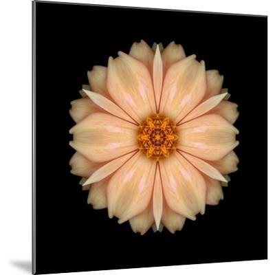 Kaleidoscope Peach Dahlia-David Bookbinder-Mounted Art Print