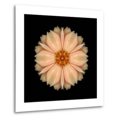 Kaleidoscope Peach Dahlia-David Bookbinder-Metal Print