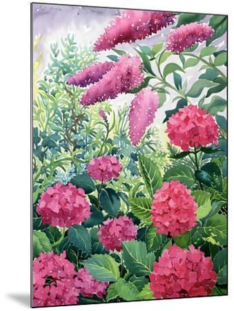 Garden Hydrangeas and Buddleia-Christopher Ryland-Mounted Giclee Print